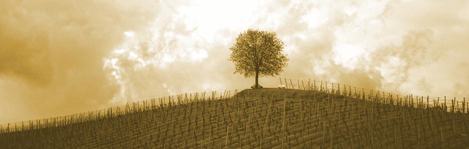 boom-van-wijsheid2